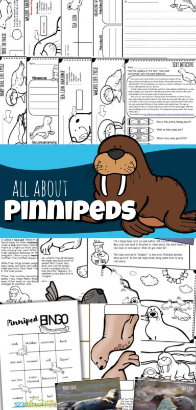 Make learning about the aquatic mammals Pinnipeds FUN with this no prep, zoology science lesson for elementary age students. With the easy-to-read text filled with interesting facts plus cute clipart, engaging worksheets, coloring pages, review game, answer key, and more - this is a great lesson for kids to learn all about pinnipeds! Perfect for homeschool, coop to teach kindergarten, first grade, 2nd grade, 3rd grade, 4th grade, 5th grade, 6th grade, grade 7, and grade 8.