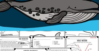 Learn all about the largest animal alive in this fun science unit for kids! Whether you are looking for non fiction mini unit on zoology, are studying the ocean and marine mammals, or just have an interest in these gigantic animals - you will love the easy text, printable worksheets, label the whale anatomy, coloring pages, whale science experiments, and more included in this printable lesson.