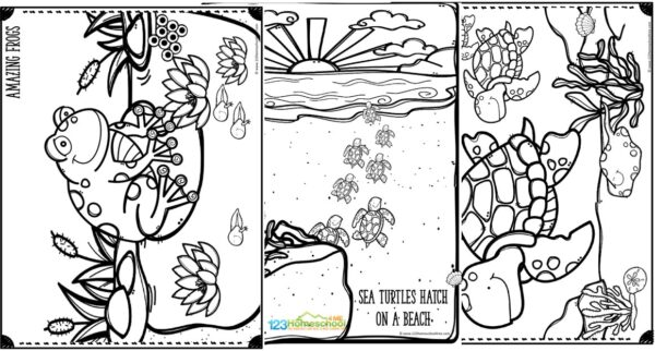 cute printable aquatic frogs and sea turtle coloring pages