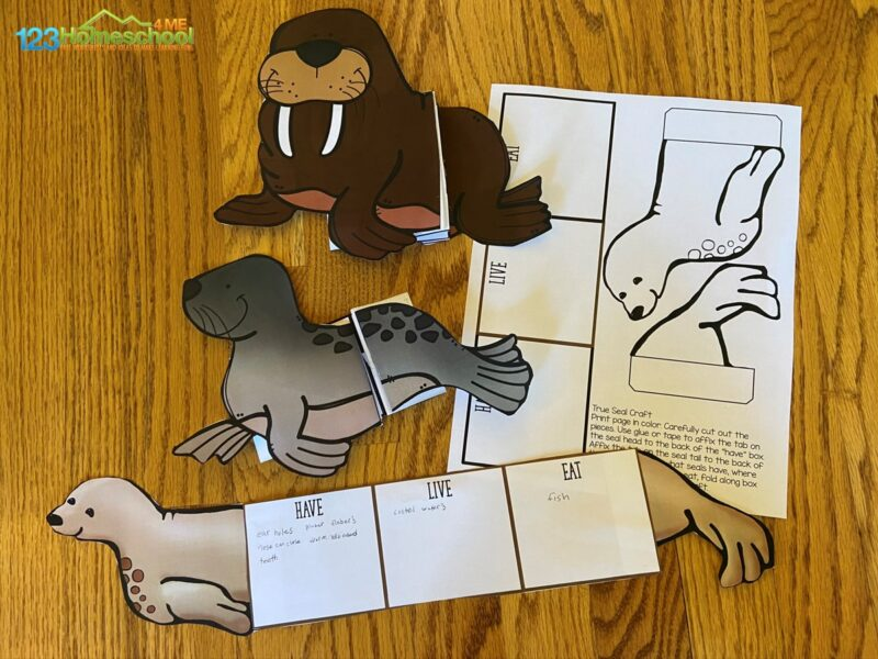 pinniped seal, sea lion, walrus printable craft for kids