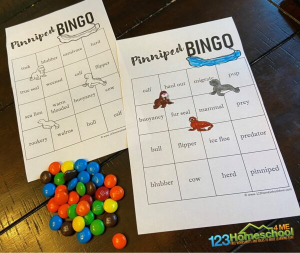pinniped bingo review game