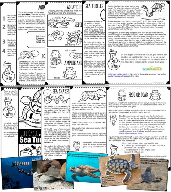 sea turtles, sea snakes, frogs, toads, and salamander facts for kids in a fun printable lesson