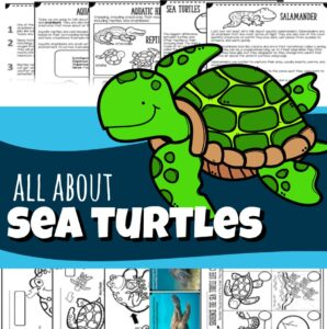 All About Sea Turtles
