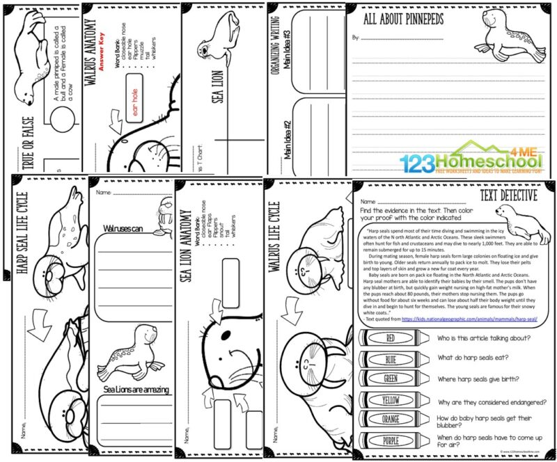 lots of seal, sea lion, and walrus printables for kids to label the anatomy, learn about life cycles, reading comprehension and text clues, writing prompts, printable test, true and false worksheet, and more