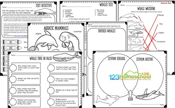 printable whale worksheets for kindergarten, grade 1, grade 2, grade 3, grade 4, grade 5, grade 6, grade 7 , and grade 8 including answer key