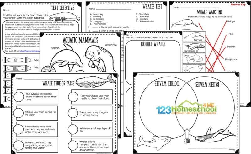 printable whale worksheets for kindergarten, grade 1, grade 2, grade 3, grade 4, grade 5, grade 6, grade 7 , and grade 8 including answer key