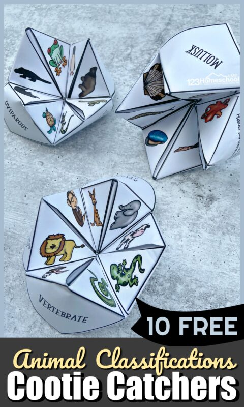 FREE Animal Cootie Catchers - Play and learn about Animal Classifications for Kids with 10 different free printable Cootie Catchers! Print in color or black and white and have fun learning or reviewing with this fun science activity for kids in pre k, kindergarten, first grade, 2nd grade, 3rd grade, 4th grade, 5th grade, and 6th grade.