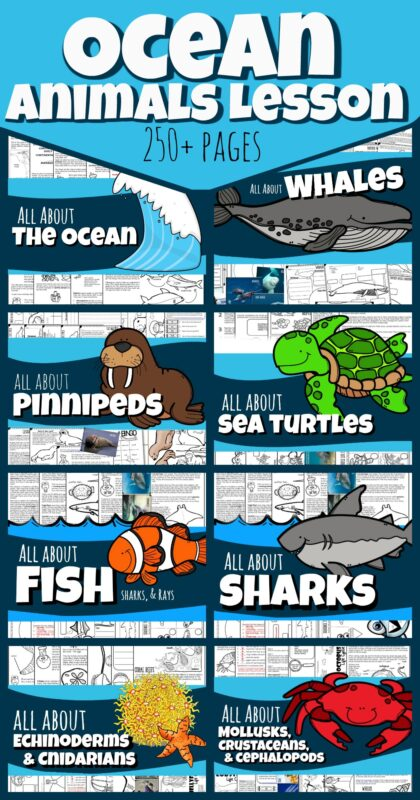 Dive in to this HUGE Ocean Animals Lesson filled with fascinating information about the oceans, whales, star fish, sharks, and more amazing creatures. You will find engaging text, ocean science experiments, ocean printables, ocean worksheets, ocean life cycles, printable under the sea crafts, label the anatomy, report templates, creative writing prompts, beautiful color flashcards, sea animals coloring pages, and so much more for kindergarten, first grade, 2nd grade, 3rd grade, 4th grade, 5th grade, and 6th grade science lessons.