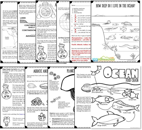 Huge 250 page all about the ocean lesson for kindergarten, grade 1, grade 2, grade 3, grade 4, grade 5, grade 6, grade 7, and grade 8