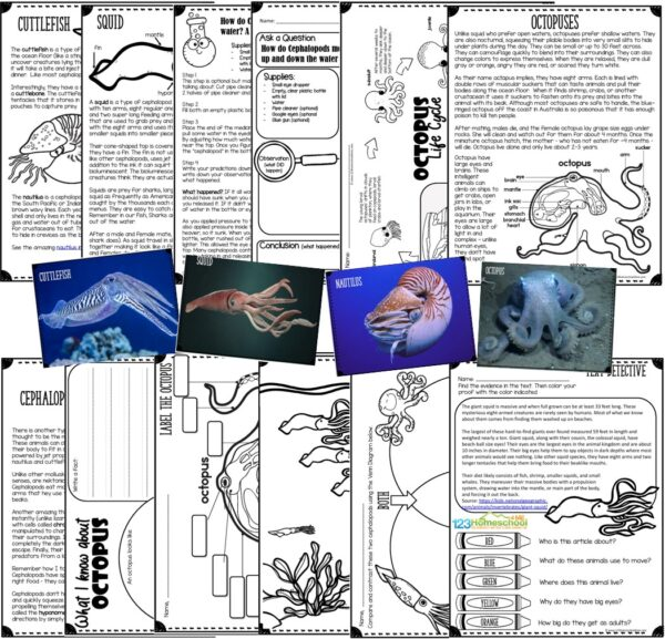 tons of interesting facts and information for kids to learn about cephalopods such as squid, octopus, nautilus, and cuttlefish. Printables to label anatomy, learn about octopus life cycles, text detective, same and different, coloring pages, worksheets, and more.