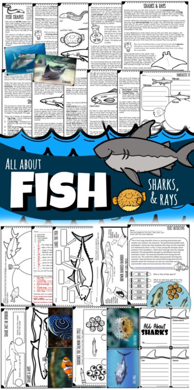 Learn All About Fish, Sharks, and Rays with this fun, engaging printable science lesson for elementary and middle school students. With cute clipart, hands on science experiments, worksheets to learn life cycles, labeling anatomy, report templates, shark craft, fish life cycle spinner, tests, creative writing prompts and more this unit is perfect for classrooms, science units, homeschoolers, summer school and more. (Kindergarten, first grade, 2nd grade, 3rd grade, 4th grade, 5th grade, 6th grade, 7th grade, and 8th grade kids at home)