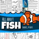 Fish for kids lesson plan filled with tons of fun information and facts including shape, camouflage, life cycles, label anatomy, tests, experiments on swim bladder / buoyancy, lateral lines, and more!