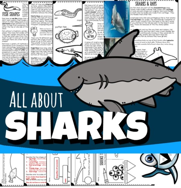 Take the fear out of kids as they learn all about sharks! These amazing predators only need to eat once a month, have rows of teeth / grow new teeth for ones that fall out, can deliver shark pup eggs into cases called mermaid tales, and so much more!