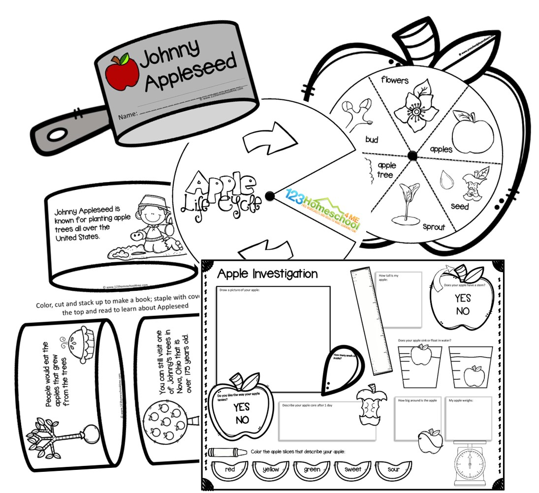 apple life cycle, apple experiment, and johnny appleseed