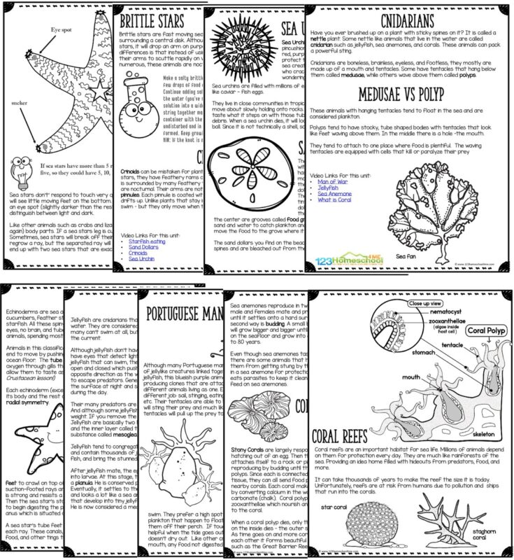 learn all about star fish, jelly fish, coral, for kids with this engaging, printable lesson
