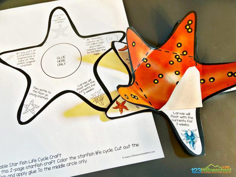 star fish life cycle craft