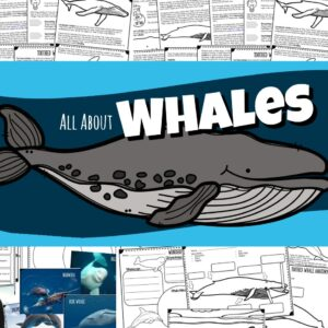 All About Whales and Dolphins lesson for kids. Printable information, facts, worksheets, label the whale, whale life cycle and more!