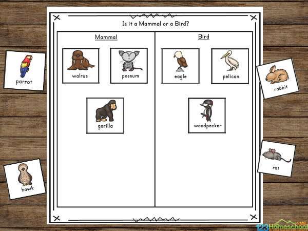 Animal Classification for Kids from kindergarten, grade 1, grade 2, grade 3, grade 4, grade 5, and grade 6 in elementary science lessons