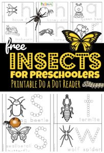 Insects for Preschoolers