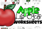 Life cycle of an apple tree worksheet