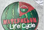 If you are learning about the life cycle of a watermelon you will love this handy, free printable Watermelon Life Cycle spinner to help kids learn and review. This is such a fun science printable for preschool, pre k, kindergarten, first grade, 2nd grade, 3rd grade, and 4th grade students.