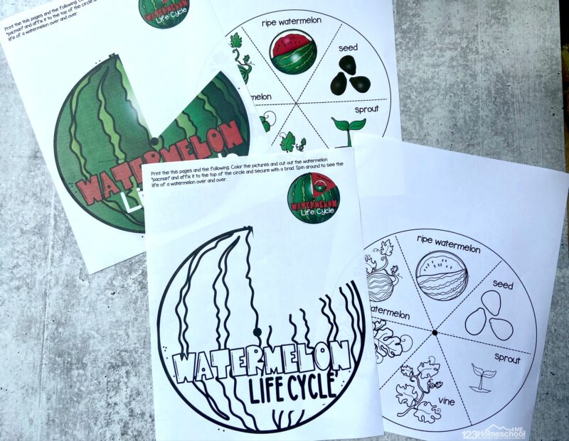 download the pdf file with the watermelon template to make the watermelon printable life cycle spinner for kids of all ages