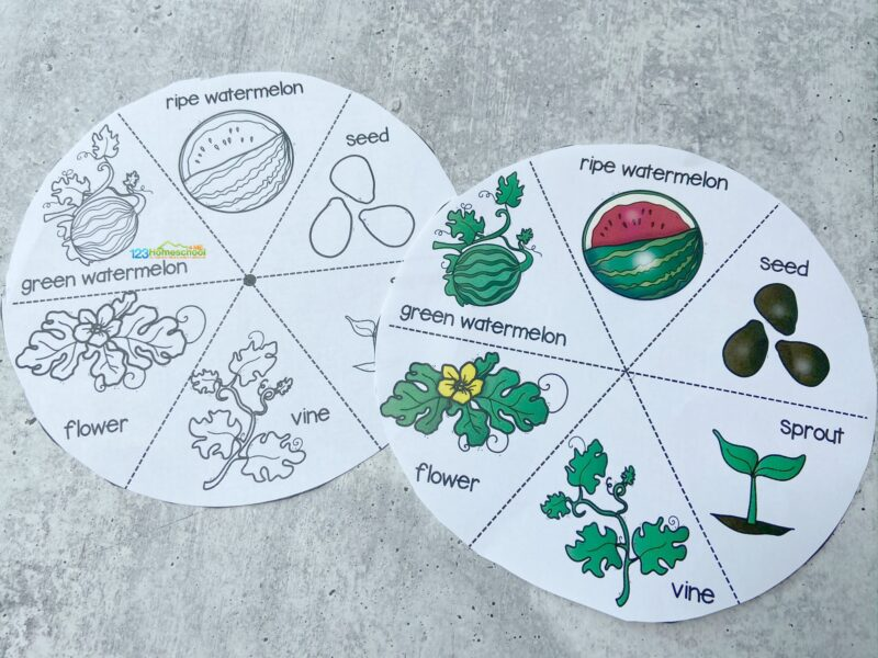 fun science activity to add to your next Watermelon Theme
