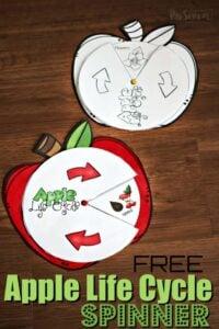 apple life cycle printable