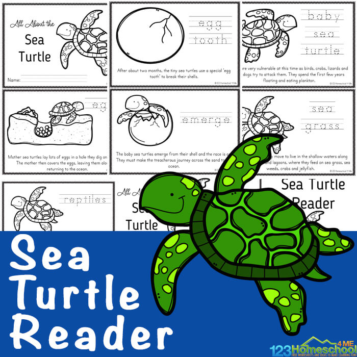 Are your kids fascinated by sea turtles? These large, graceful reptiles are truly amazing! Learn lots of facts about sea turtles for kids in these free printable sea turtle readers filled with lots of information, facts, and the Sea turtles life cycle. Download pdf file and print so children can color, read, and learn about the life cycle of a turtle. This is a great science printable for preschool, pre-k, kindergarten, first grade, 2nd grade, 3rd grade, 4th grade, 5th grade, and 6th grade students.