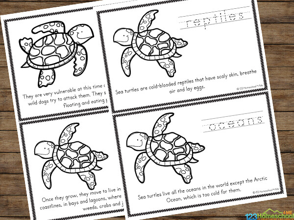 free printable Sea Turtle Worksheets