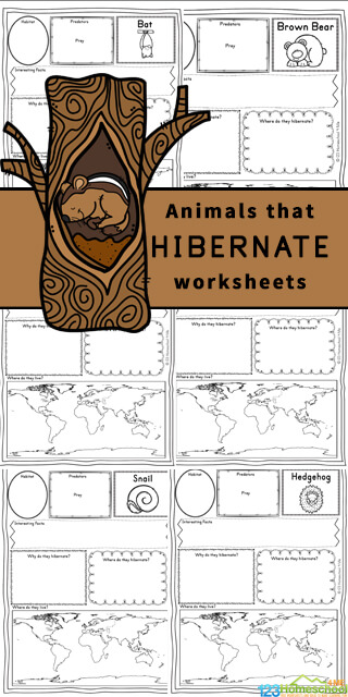 Children will love learning about these fascinating animals from around the world that hibernate during the cold winter months. Grab these free printableAnimals that Hibernate Worksheets for kindergarten, first grade, 2nd grade, 3rd grade, 4th grade, 5th grade, and 6th grade students to make learning about animals fun and easy!