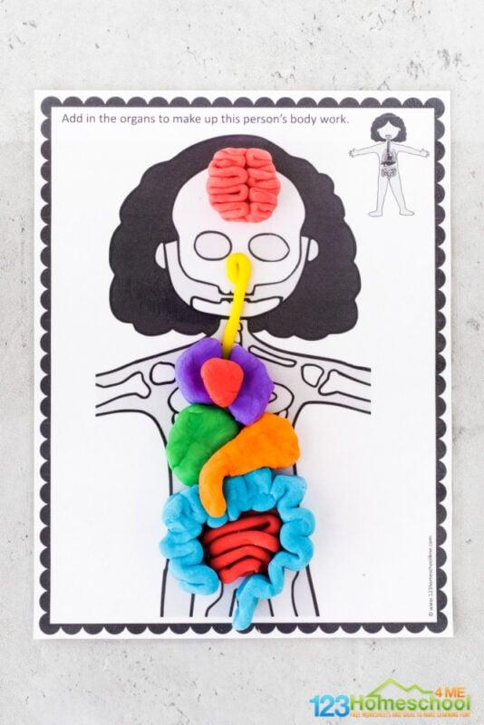 Body Organs for Kids