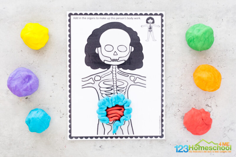 Body Systems for kids