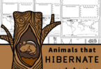 Children will love learning about these fascinating animals from around the world that hibernate during the cold winter months. Grab these free printable Animals that Hibernate Worksheets for kindergarten, first grade, 2nd grade, 3rd grade, 4th grade, 5th grade, and 6th grade students to make learning about animals fun and easy!
