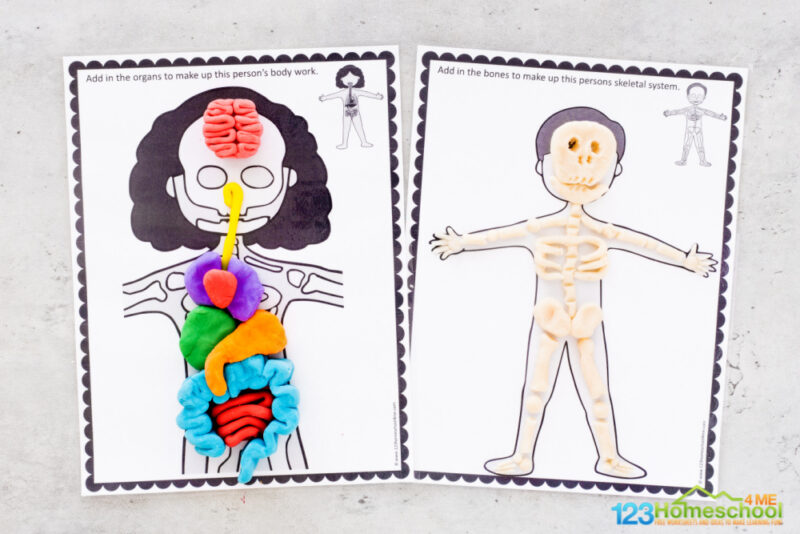 This is such a funhuman body preschool,or for elementary age students such ashuman body for kindergarten.