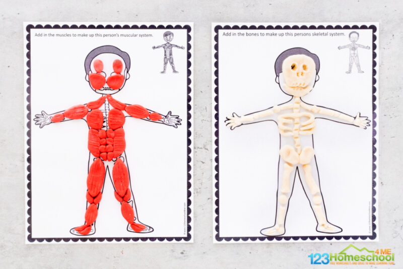 Human body organs for kids