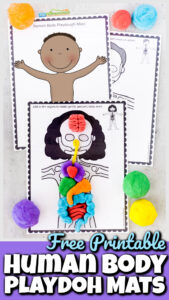 This fun hands-onhuman body for kids project is such a fun way to learn about our amazing bodies! These Human Body Playdough Mats are a fun way for kids of all ages to learn about what is inside our body. Learn about human body parts for kids by completing the free printable playdouh mats. Children will learn aboutbody systems for kids as they make bones, skeletal system, muscles, organs, and more! Use these playdough mats as part of a study of anatomy making human body model for kids from toddler, preschool, pre-k, kindergarten, first grade, 2nd grade, and 3rd grade students. Simply print theplaydoh mats and learn about my body parts for kids with a hands-on science activity.