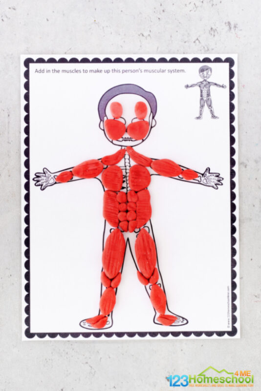 muscular system for kids