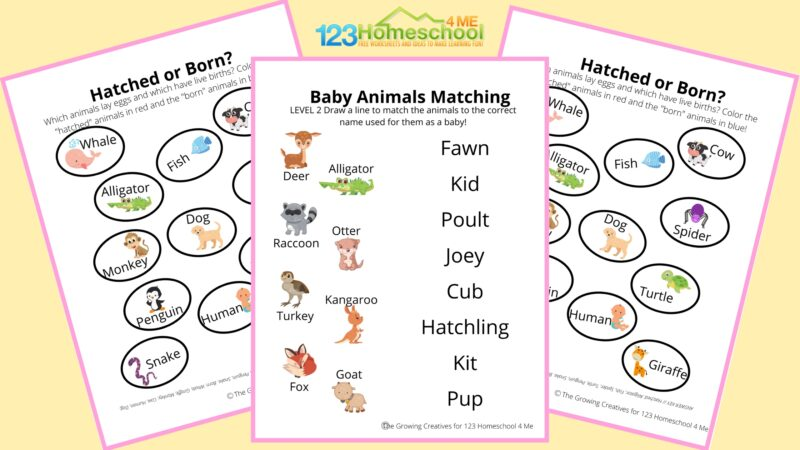 Animals and their babies worksheet