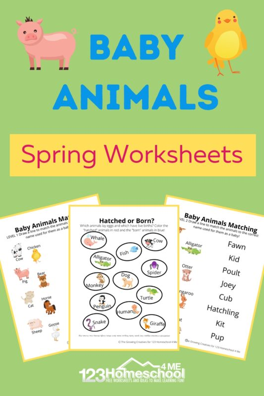 Make learning about baby animals fun with these free printable, baby animal worksheets. These animals and their babies worksheet pages include three different activities to teach preschool, pre-k, kindergarten, and first graders about the names of different animals as babies as well as which babies are hatched and which are born! Simply print pdf file with animals and their young ones worksheet and you are ready to play and learn!