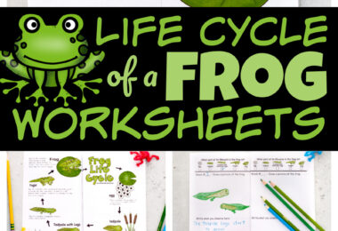 Kids will have fun learning about the life cycle of a frog with this free printable notebook filled with interesting information, life cycle chart, life cycle of a frog printable, vocabulary, and a space for recording their observations as they watch tadpoles become frogs in this homeschool science experiment. Simply download pdf file with life cycle of a frog worksheet and you are ready to play and learn this spring and summer!