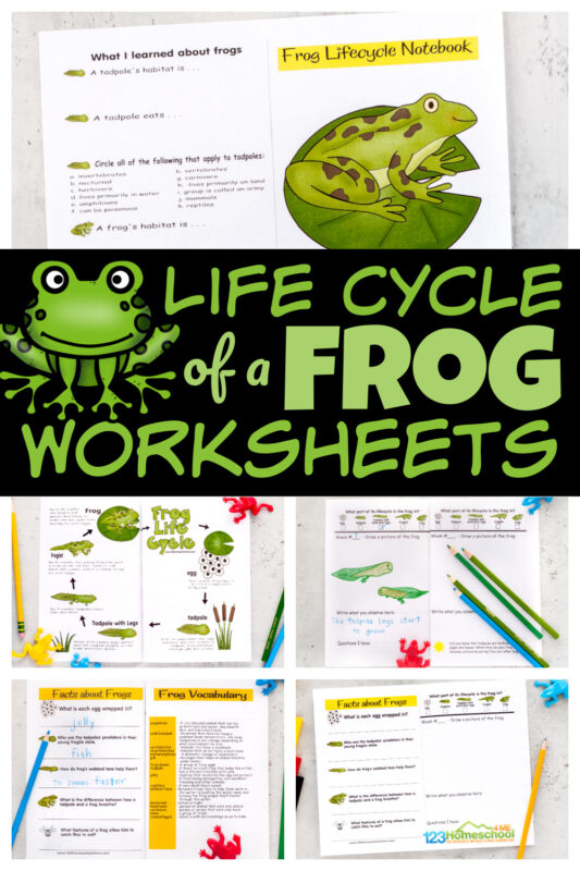 Kids will have fun learning about the life cycle of a frogwith this free printable notebook filled with interesting information, life cycle chart, life cycle of a frog printable, vocabulary, and a space for recording their observations as they watch tadpoles become frogs in this homeschool science experiment.Simply print pdf file with life cycle of a frog worksheet and you are ready to play and learn this spring and summer!