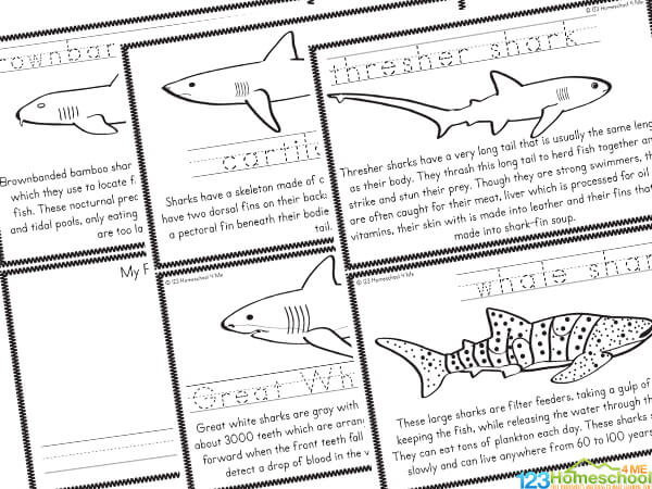 all about shark for kids