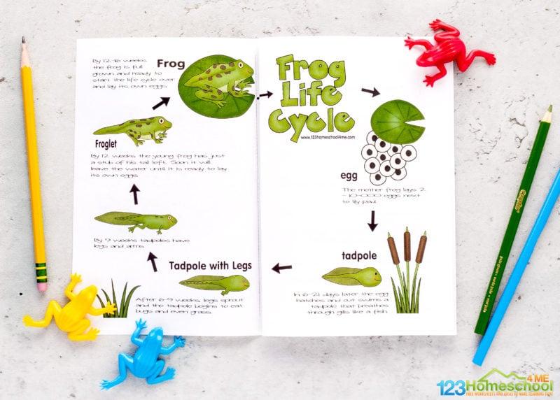 life cycle of a frog printable