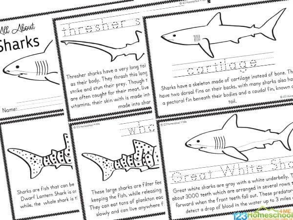 shark worksheets
