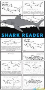 Learn about amazing, feared Sharks for kids with this free shark printables reader. Children from preschool, pre-k, kindergarten, first grade, 2nd grade, 3rd grade, 4th grade, and 5th grade students will love learning about these large creatures whose skin resembles sandpaper while reading through this reader, learning about a variety of different breeds of sharks. Use this for shark theme, ocean theme, or shark activity to learn more about these amazing ocean animals! Simply print pdf file with sharks worksheets to make into a shark book for kids to read, color, and learn all about sharks!
