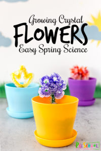 growing crystal flowers easy spring science experiment