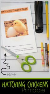 life cycle of a chicken worksheets