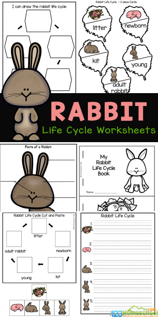 If you are looking for a fun, simple way for kids to learn about the life cycle of a rabbit, then you will love theserabbit worksheets. Theserabbit life cycle worksheets are a simple, fun and effective way to teach kids about animal life cycles. These bunny worksheets are perfect for a spring theme or Easter theme. Simply download pdf file with life cycle worksheets for preschool, pre-k, kindergarten and first grade, 2nd grade, 3rd grade, and 4th grade students.