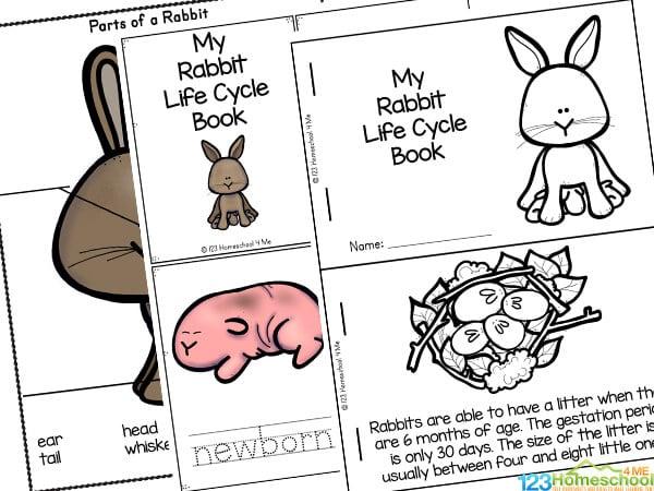 free life cycle printables for kids